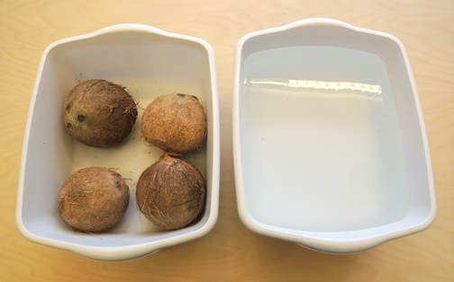 coconut experiment set up