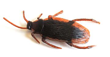 plastic cockroach