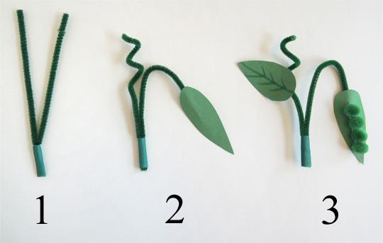pea plant steps