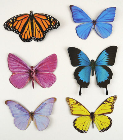sample of butterflies