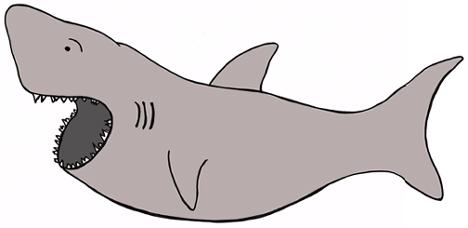 marissa's shark