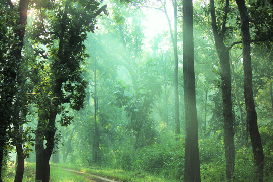 The_Jungle_of_Kanha