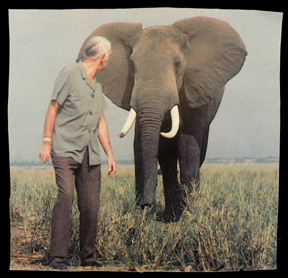 man and elephant photo