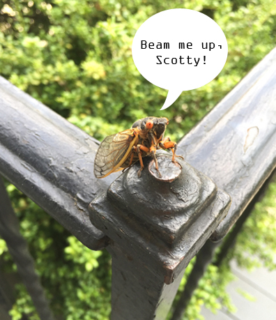 bugging out_4